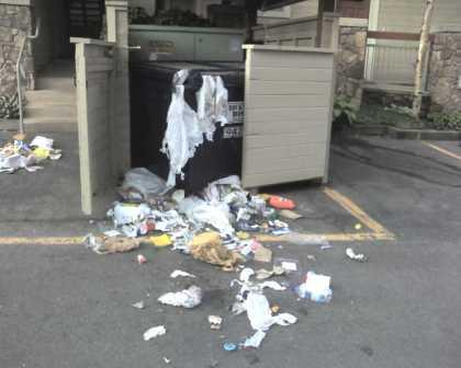 Dumpster enclosure with trash everywhere - ransacked by a bear